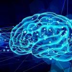 中年セミリタイア者に朗報!? 新しい情報を学び理解する能力は、50歳前後でピークに達するという調査結果